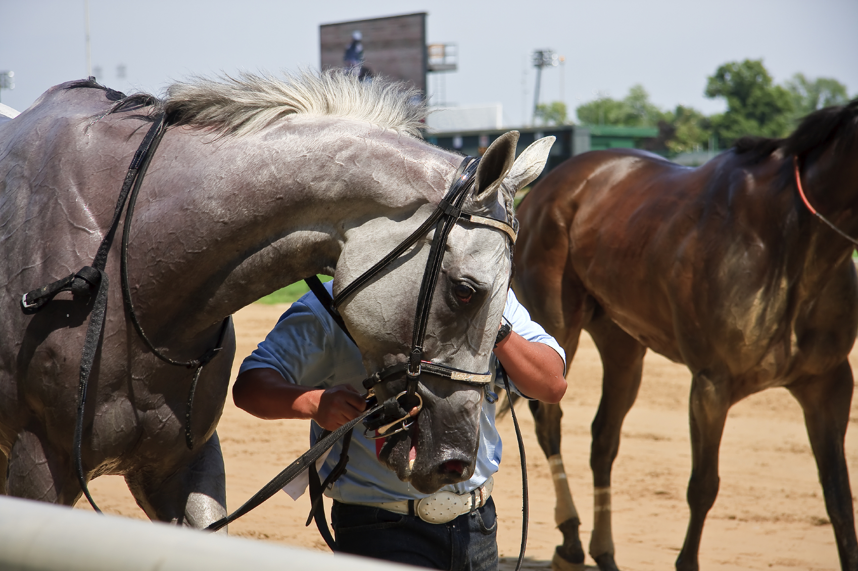 Off to the Races: 2016 Horse Racing Season Guide